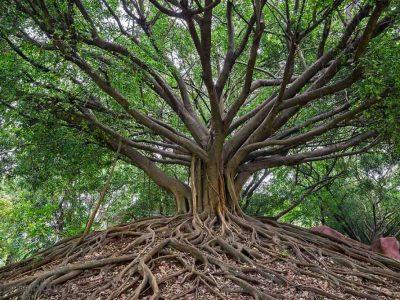 1527 01_The Wisdom Tree-1024x682_0